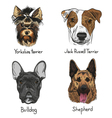 Set of drawn dogs vector image vector image