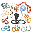 snakes exotic species flat vector image