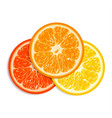fresh citrus fruit isolated on white background vector image vector image