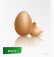 realistic egg vector image vector image