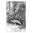 reynard the fox hiding the treasure vintage vector image vector image