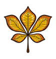 autumn yellow chestnut tree leaf isolated on white vector image
