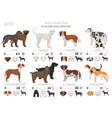 hunting dogs collection isolated on white flat vector image vector image