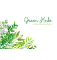 wild herbs leaves and ferns green corner frame vector image