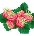 strawberry delicious top view green leaf vector image