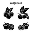 fresh mangosteen on a white background vector image
