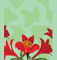 peruvian lily vector image vector image