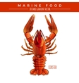 Red Lobster Marine Food vector image vector image