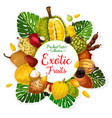 exotic tropical fruits and berries with palm leaf vector image