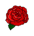 bud of rose with bright red petals and one green vector image vector image