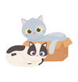 cats make me happy cat in box and other sitting vector image vector image