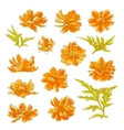 Collection of cosmos flowers vector image vector image