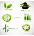 Natural signs with leaves flowers and grass vector image vector image