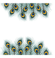Peacock feather on isolated background vector image