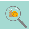 snail insect under magnifier zoom lense flat vector image