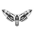 engraving insect vector image