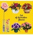 Set of potted flowers on a yellow background vector image vector image