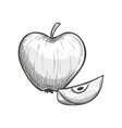 sketch of apple vector image vector image