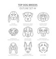 top dog breeds hunting dogs set pet outline vector image vector image