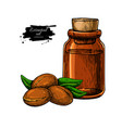 argan essential oil bottle hand drawn vector image vector image