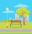 bench in city park flat vector image