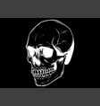 outline skull in black design vector image