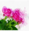 watercolour roses vector image vector image