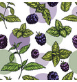 seamless pattern with mint leaves and blackberries vector image
