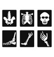 x ray icons vector image