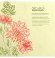 Branch of Chrysanthemum vector image vector image