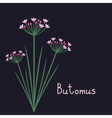 Butomus plant vector image vector image