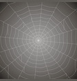 concentric white web on a gray background vector image vector image