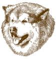 engraving big dog head vector image