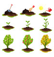 flat showing plant growing vector image