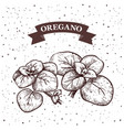 Oregano herb and spice label engraving