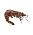 shrimp on white background vector image