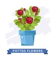 Spring colorful flowers in pots vector image vector image