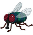 cartoon house fly isolated on white background vector image vector image