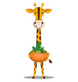 giraffe with plant on white background vector image vector image