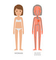 blood woman system educational vector image