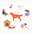 dog care infographics layout vector image vector image