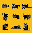 square black cats on a yellow background vector image
