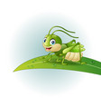 cartoon grasshopper on leaf vector image