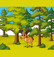 deer living in the forest vector image vector image