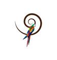 parrot logo idea design scarlet macaw bird sign vector image vector image