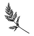 wild herb silhouette isolated on white vector image vector image