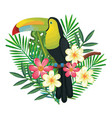 tropical and exotics flowers with toucan vector image