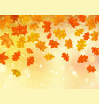 autumn background with maple and oak leaves vector image