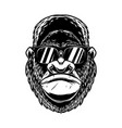 head angry gorilla with sunglasses in vintage vector image