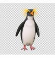 macaroni penguin on transparent background vector image vector image